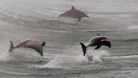 Ukrainian killer dolphins are on the loose