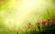 spring_wallpaper05