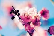 spring_wallpaper10