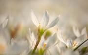 spring_wallpaper12