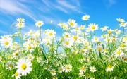 spring_wallpaper13