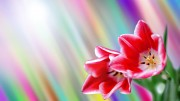 spring_wallpaper20