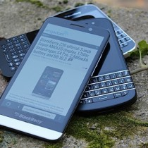 blackberry-family