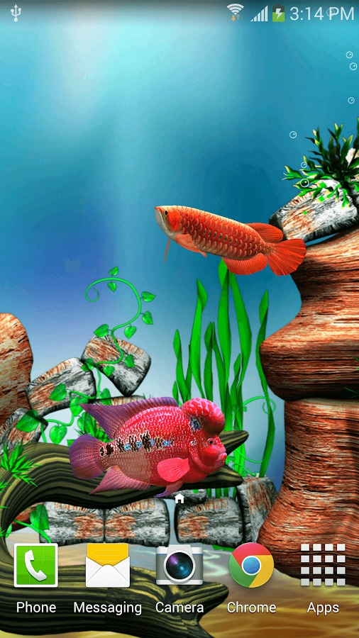 Arowana fish 3d live wallpaper review aivanet for Fish tank 3d live wallpapers
