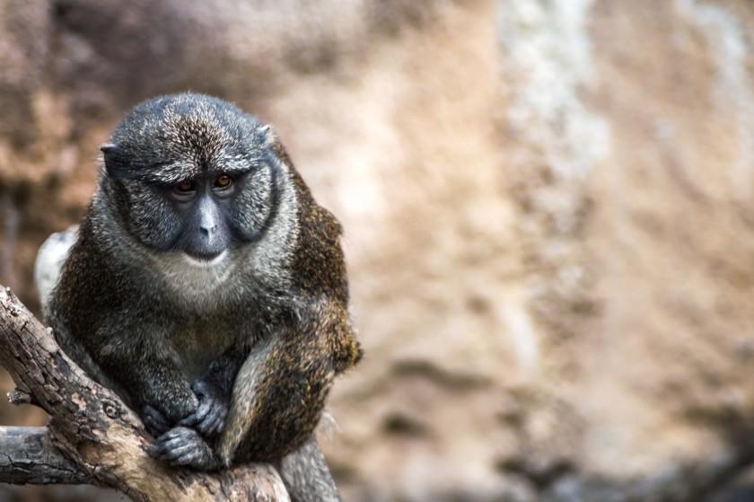 Edgars-monkey-image