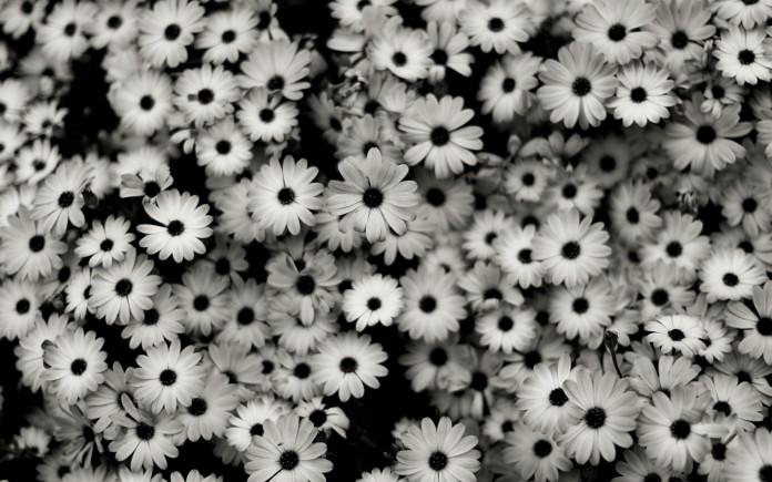 black-white-background-2-1