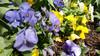 g5-flowers_0.jpg?itok=gTQ9SIVI