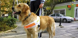 Uber settlement protects travel with your guide dog