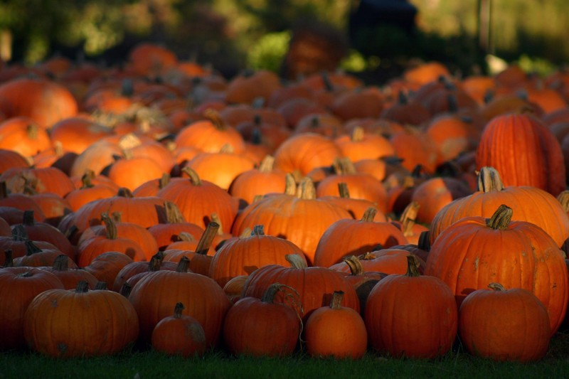 Forget Pumpkin Spice Lattes Get Your Pumpkin Fix With These