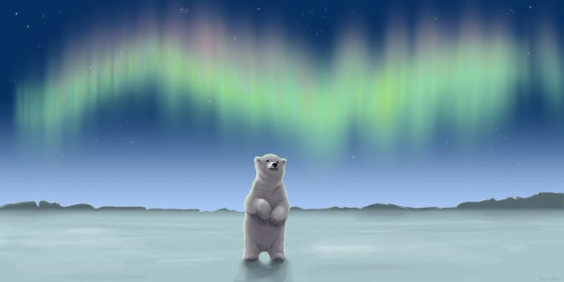 polar_bear_aurora-wall.jpg?itok=7pGwyQ3f
