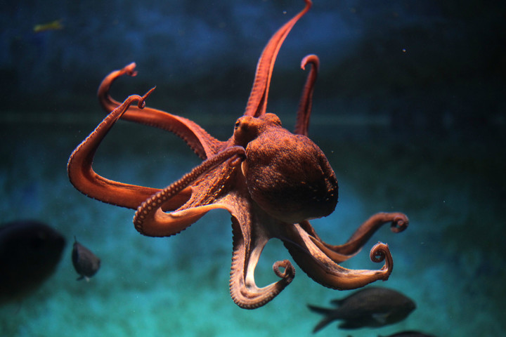 biomimicry examples squid