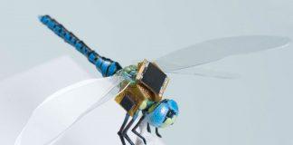 Genetic engineering dragonflies into light-responsive, cybernetic drones