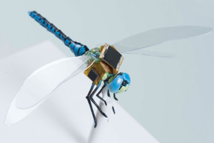 Genetic engineering dragonflies into light-responsive, cybernetic drones