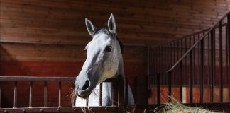 Horse antibodies may offer the perfect — and affordable — cure to Ebola