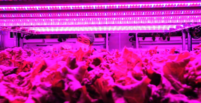 Panasonic's indoor farm, and more in the week that was