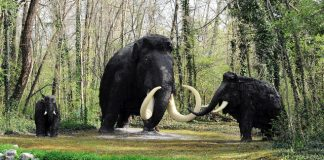 Hybrid woolly mammoths could soon walk the Earth, thanks to Harvard scientists