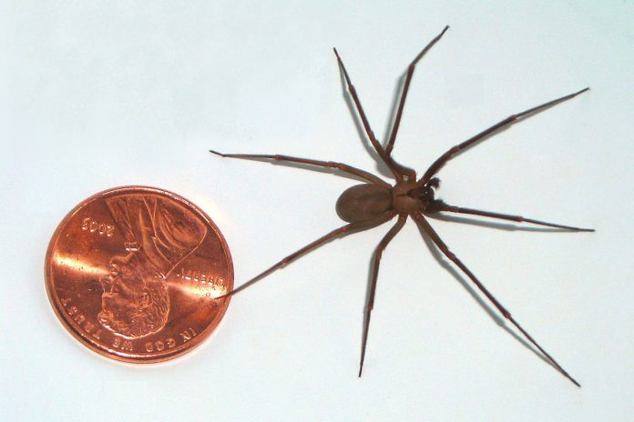 Deadly spider's strange silk may help capture space debris, research says