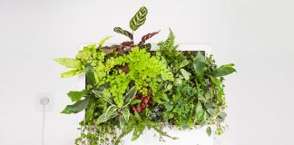 Bionic Leaf project creates natural fish food out of thin air — sort of