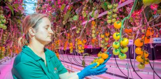 Will vertical farming continue to grow, or has it hit the greenhouse ceiling?