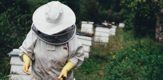 RoboBees, city sanctuaries, and hot hives could save the world from 'beepocalypse'