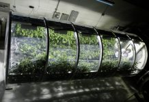 NASA inflatable greenhouse could help feed astronauts on other planets