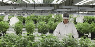 Inside the high-tech labs that make sure your legal marijuana is safe