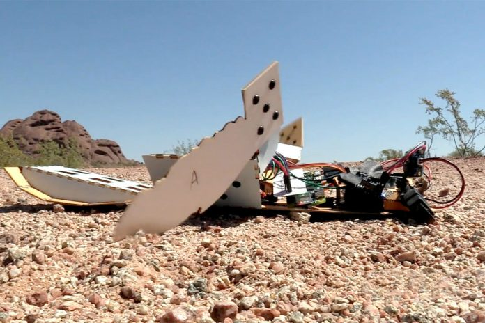 Slow and steady wins the race: these robotic turtles will comb the desert for landmines