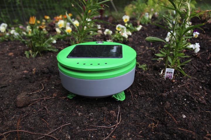 tertill kickstarter weeding robot img 4405