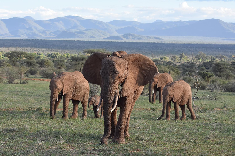 wiper elephant poacher detecting dsc 1536