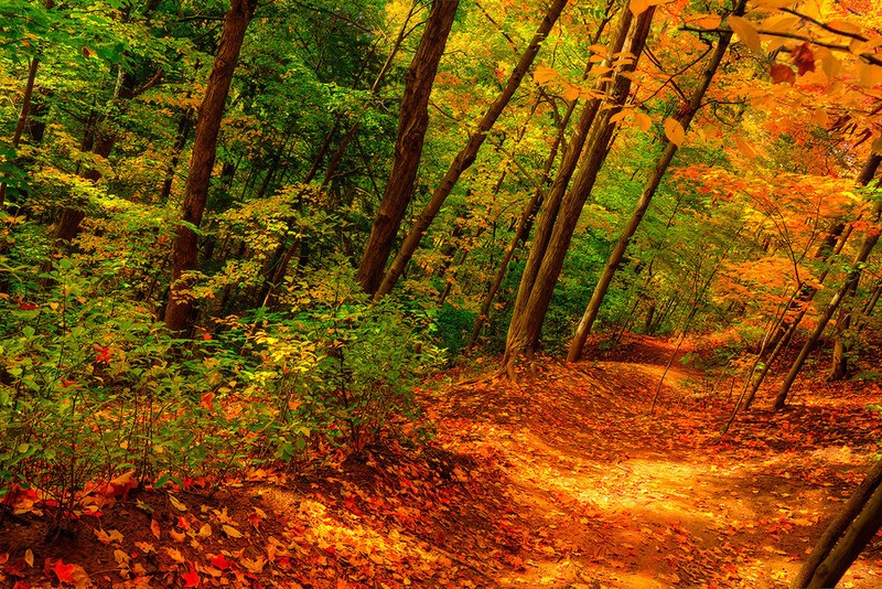 bronte_the_path_downhill_by_qels-d5hcs2t