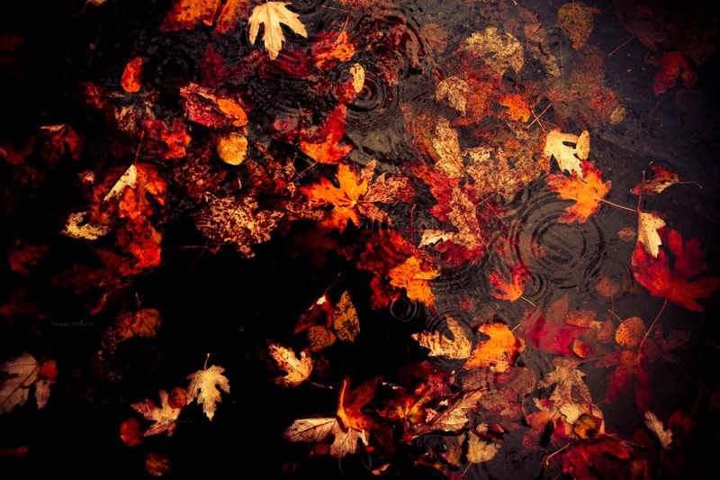 leaves_and_rain_by_bloodpromiser-d2yuhgr