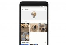 Google Photos now recognizes your pets as people, like it should