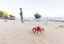 The Christmas Island annual crab migration is coming to Google Street View