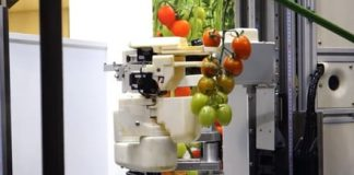 Panasonic built a robot gentle enough to pick tomatoes, but not exactly graceful