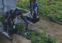 Dual-arm pickle-picking robot will assist farmers with cucumber harvests