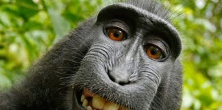 From monkey selfies to Intel allergies, here are the 7 weirdest tech lawsuits ever