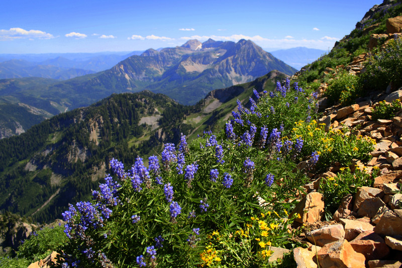 wildflower-mount-wall.JPG?itok=FxMV1VxL