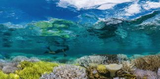 CRISPR could one day help conservationists save our ocean's coral