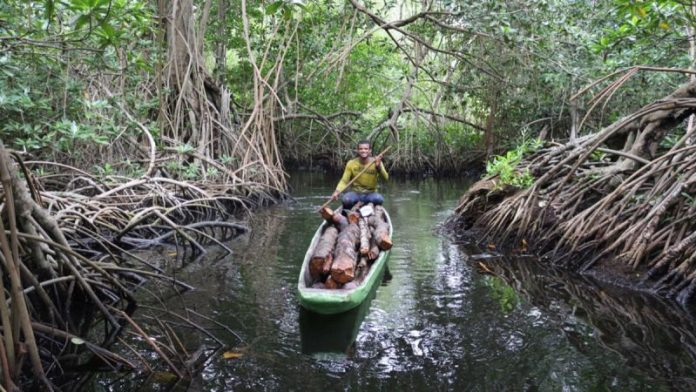 Apple to Invest in Mangrove Forest Restoration Project in Colombia