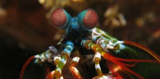Shrimp eyes inspire new camera focused on helping self-driving cars see better