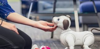 Can Aibo replace Fido? I fostered Sony's robot dog for a week to find out