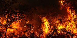 Early-detection system for wildfires could save many states from big burns