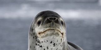 USB drive survives two years in seal poop before being reunited with its owner