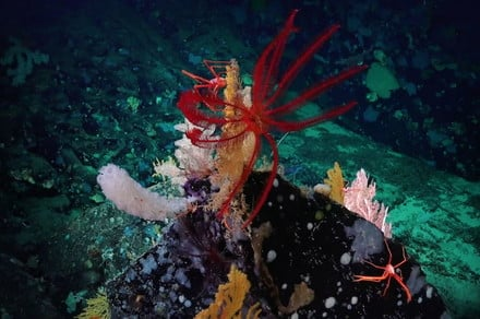 Get a glimpse of the ocean floor with remarkable images of deep sea creatures