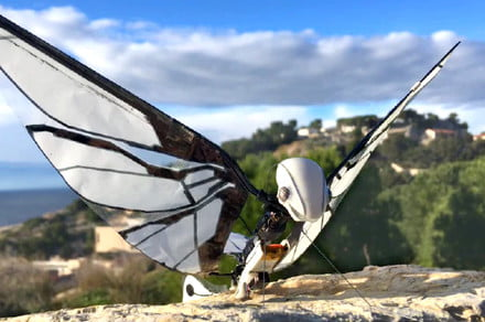 Be prepared to bug out over this insect-inspired winged drone