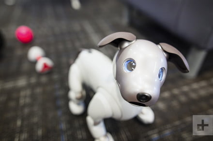 Sony's Aibo robot dog can now patrol your home for persons of interest