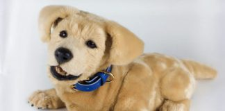 Tombot is the hyper-realistic dog robot that puts Spot to shame