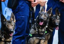 China has cloned its best police dog. Now it wants to mass-produce more