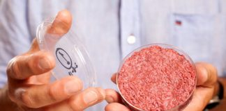 Burgers are just the beginning: Embracing the future of lab-grown everything