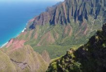 Hawaiian botanists' drone discovers a plant thought to be lost forever